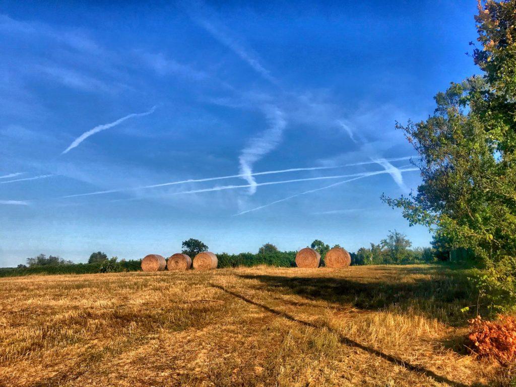 Foto del Parco del Ticino a Pavia